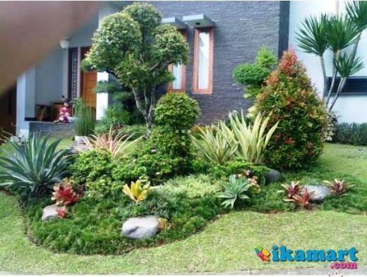 Supplier Rumput Gajah Mini Golf Jepang Babat Pohon Hias Kolam Miniatur Koi Dll