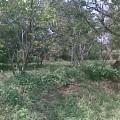 Jual Tanah Di Bogor | Tanah  1.200 meter