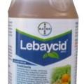 LebayCid