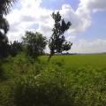 Jual Tanah Luas 950m2 SHM Lokasi Di Desa Mlajah Kab. Bangkalan Kelurahan Mlajah Kabupaten Bangkalan