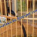 Murai Medan isian Full Siap Produksi (H.Sudarso Amar)